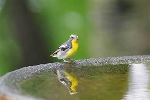 鳥類(動植物等)の調査